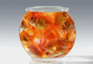 http://4.bp.blogspot.com/--Ppu2mdkzy0/VIINewAYGzI/AAAAAAAAFAE/GuxnMRK6smE/s1600/620-goldfish-small-bowl-claustrophobia.imgcache.rev1363017034520.jpg