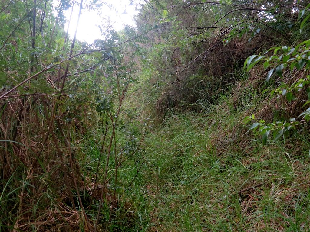 Kaupo-Gap-Trail-Overgrown-Bushes